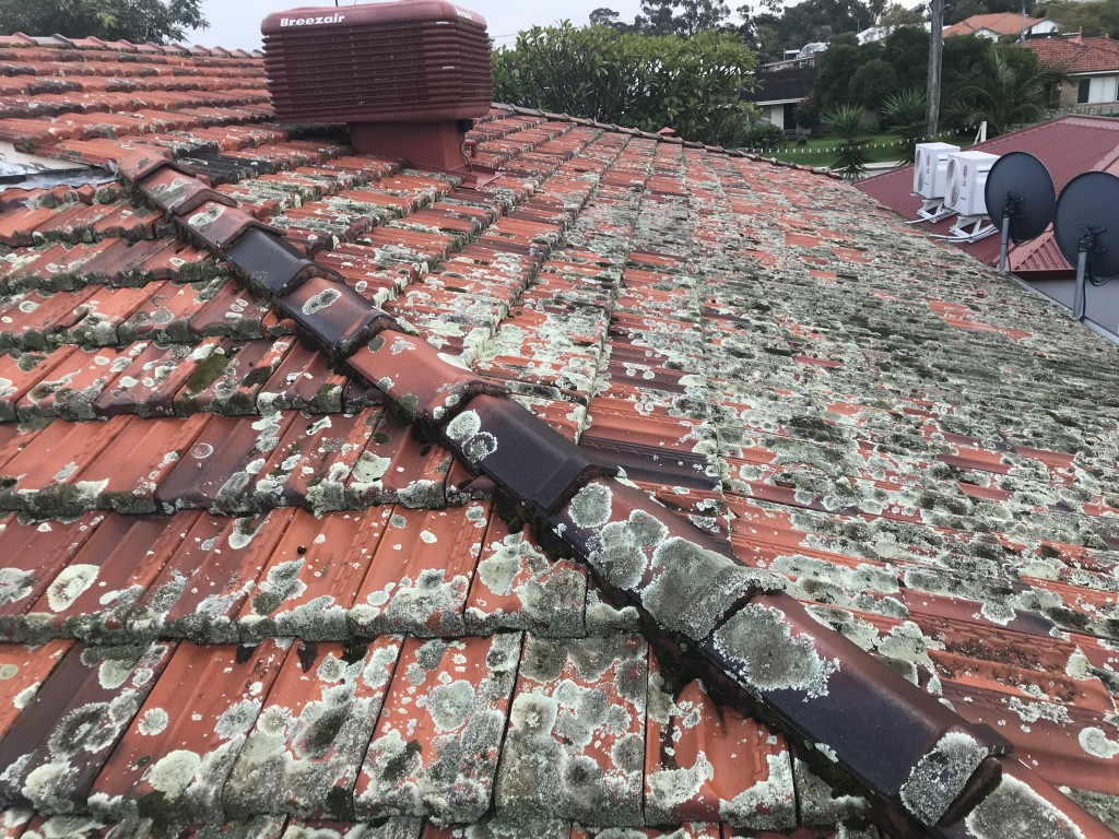 moldy dirty roof