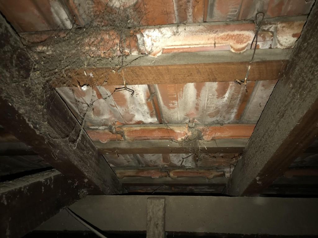 mold formed under tiles